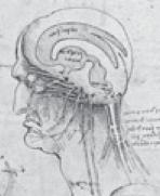 Hohlräume Gehirn
